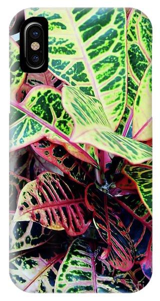 Colorful - Croton - Plant IPhone Case