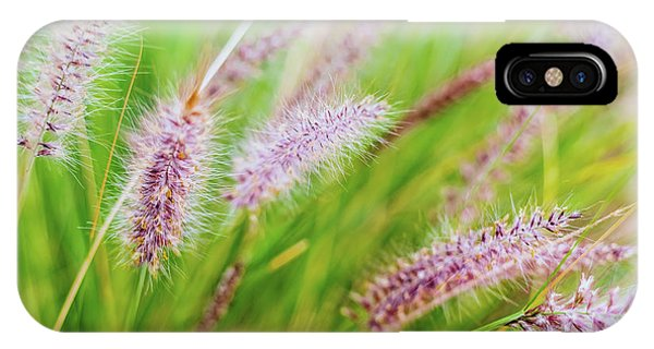 Colorful Flowers In Purple Spikes, Purple Fountain Grass, Close- IPhone Case