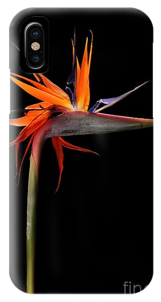 Blossom iPhone Case - Colorful Strelitzia Flower Also Called by Johan Swanepoel