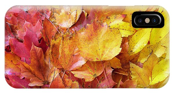 Colors Of Fall - Red To Yellow IPhone Case