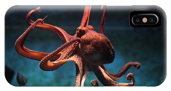 Sea Life iPhone Case - Common Octopus Octopus Vulgaris by Vladimir Wrangel
