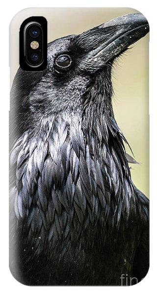 Crow iPhone Case - Common Raven, Jasper National Park by Bgsmith