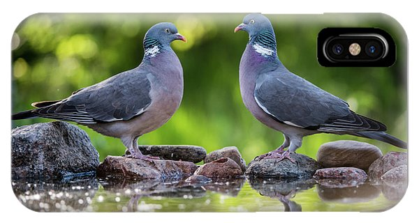 Common Wood Pigeons Meeting At The Waterhole IPhone Case