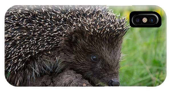 Spines iPhone Case - Cool Hedgehog On The Ground At Nature by Valery Kalantay
