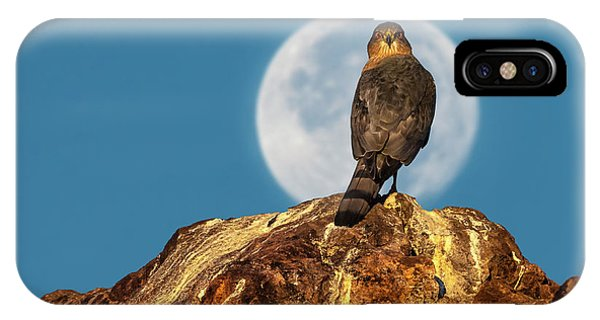 Coopers Hawk With Moon IPhone Case