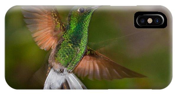Hummingbirds iPhone Case - Coppery-headed Emerald Elvira by Steffen Foerster