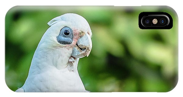 IPhone Case featuring the photograph Corellas Outside During The Afternoon. by Rob D
