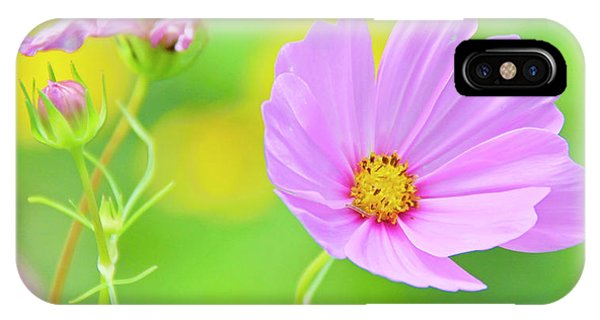 Cosmos Flower In Full Bloom, Bud IPhone Case