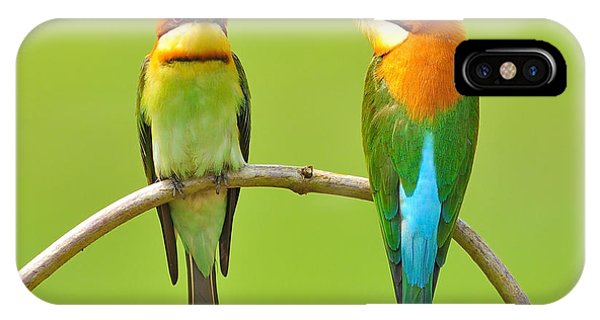 Orange Color iPhone Case - Couple Of Bee Eater Bird by Butterfly Hunter