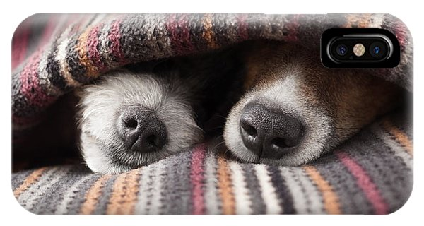 Small Dog iPhone Case - Couple Of Dogs In Love Sleeping by Javier Brosch