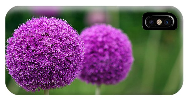 Small iPhone Case - Couple Of The Allium Purple Flowers by Northernland