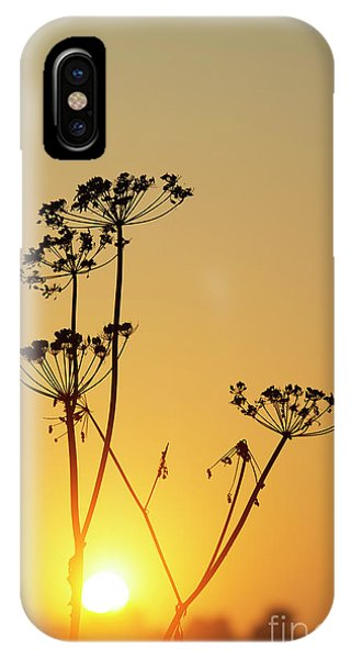 IPhone Case featuring the photograph Cow Parsley Seed Heads Silhouette by Tim Gainey