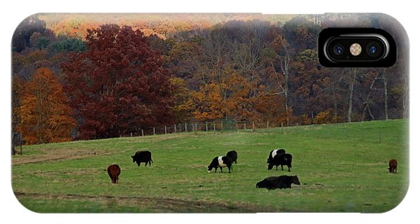IPhone Case featuring the photograph Cows Grazing On A Fall Day by Angela Murdock