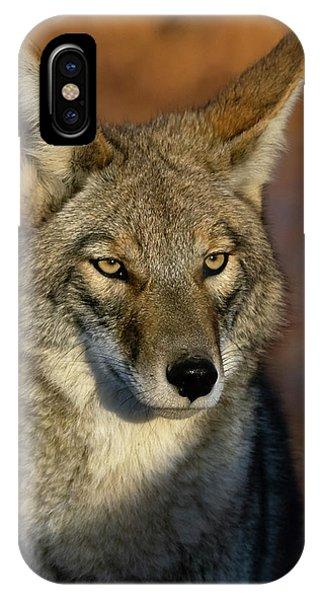 Coyote 1 IPhone Case