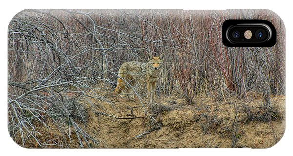 IPhone Case featuring the photograph Coyote In The Brush by Britt Runyon