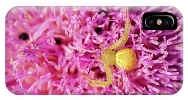 Crab Spider IPhone Case