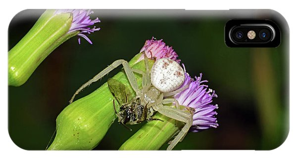 Crab Spider With Bee IPhone Case