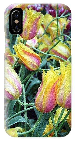 Crazy Tulips IPhone Case