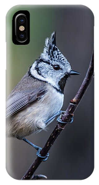 Crested Tit On A Twig IPhone Case