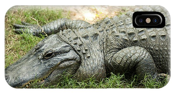 IPhone Case featuring the photograph Crocodile Outside by Rob D