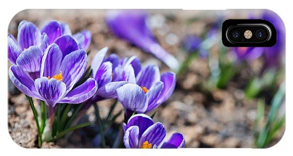 Blossom iPhone Case - Crocus In Spring Garden, Flowers In The by Gayvoronskaya yana