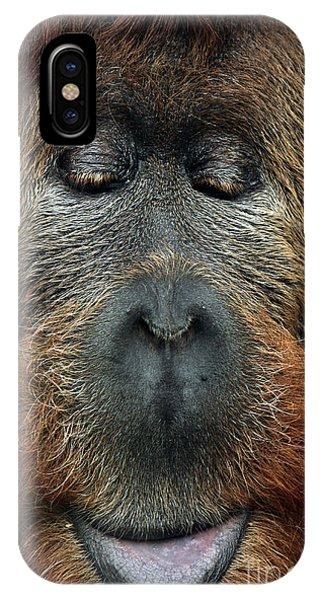 Mixed iPhone Case - Cross Hybrid Of The Sumatran Orangutan by Vladimir Wrangel