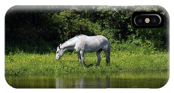 Cumbria. Ulverston. Horse By The Canal IPhone Case