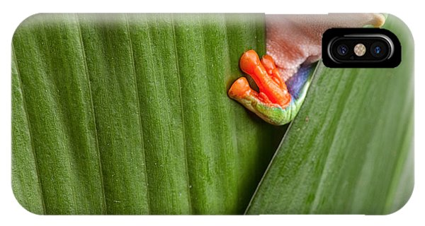Background iPhone Case - Curious Red Eyed Tree Frog Hiding In by Dirk Ercken