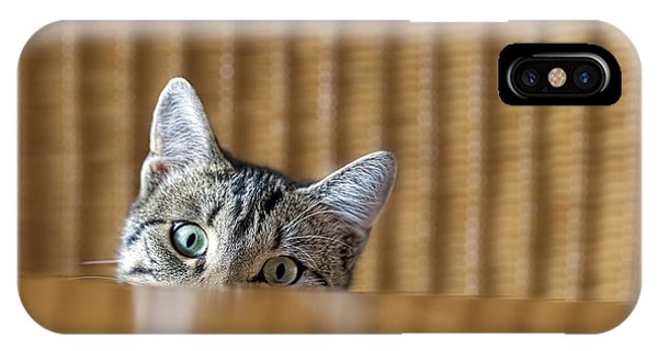 Adorable iPhone Case - Curious Young Kitten Looking Over A by Dirk Ott