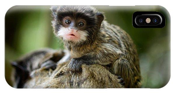 South America iPhone Case - Cute Baby Emperor Tamarin Saguinus by Eric Gevaert