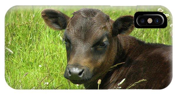 Cute Cow IPhone Case