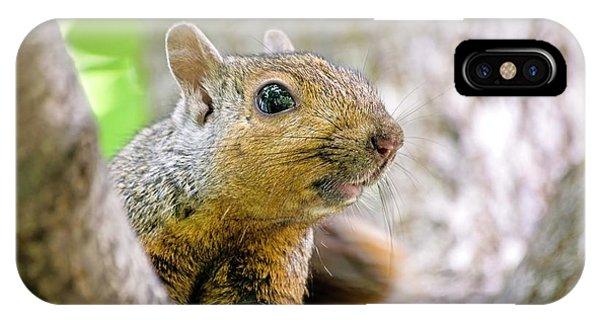 Cute Funny Head Squirrel IPhone Case