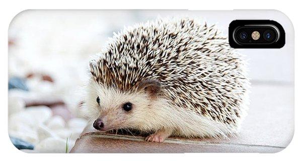 Cute Hedgeog IPhone Case