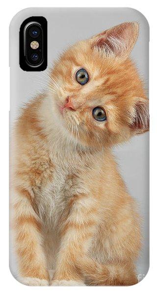 Mammal iPhone Case - Cute Little Kitten by Lana Langlois
