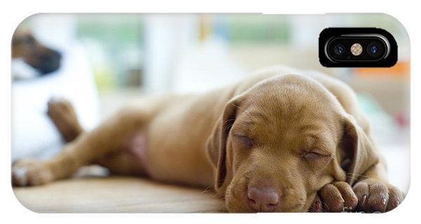Cute iPhone Case - Cute Little Rhodesian Ridgeback Puppy by Nancy Dressel