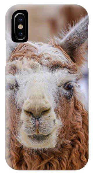 Cute Llama IPhone Case