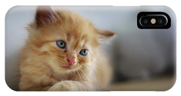 Cute Orange Kitty IPhone Case