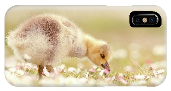 Gosling iPhone Case - Cute Overload Series - Grazing Gosling by Roeselien Raimond