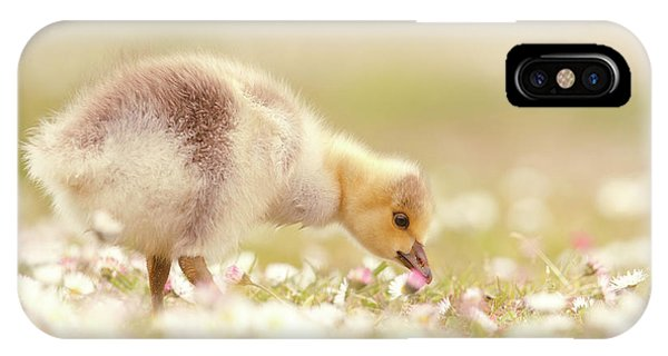 Goslings iPhone Case - Cute Overload Series - Grazing Gosling by Roeselien Raimond