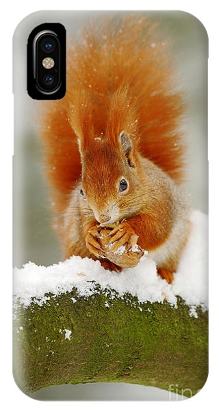 Adorable iPhone Case - Cute Red Squirrel Eats A Nut In Winter by Ondrej Prosicky