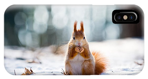 Eating iPhone Case - Cute Red Squirrel Eats A Nut In Winter by Vojta Herout