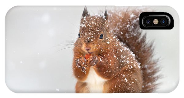 Eating iPhone Case - Cute Red Squirrel In The Falling Snow by Giedriius