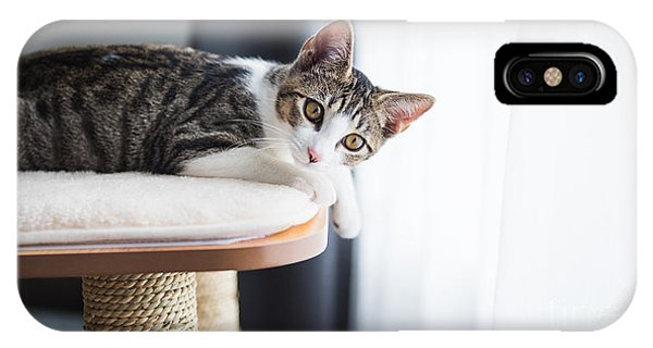 Cute Kitten iPhone Case - Cute Tabby Kitten Relaxing On Top Of by Anna Hoychuk