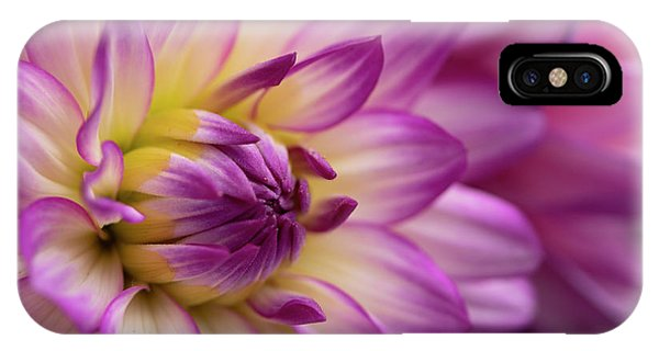 Dahlia II IPhone Case