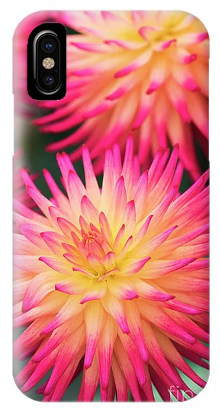 IPhone Case featuring the photograph Dahlia Josudi Tel Star Flowers  by Tim Gainey