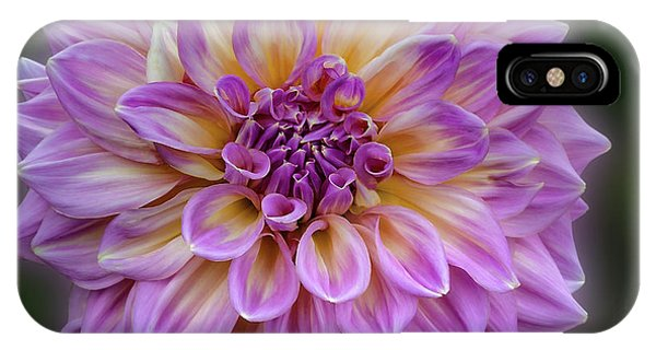 IPhone Case featuring the photograph Dahlia 'kidd's Climax' by Ann Jacobson