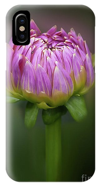Dahlia 'mingus Phillip Sr' IPhone Case