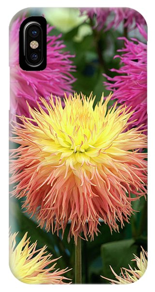 IPhone Case featuring the photograph Dahlia Normandie Frills Flowers by Tim Gainey