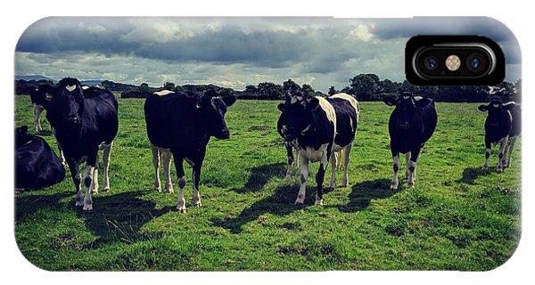Dairy Heifers IPhone Case