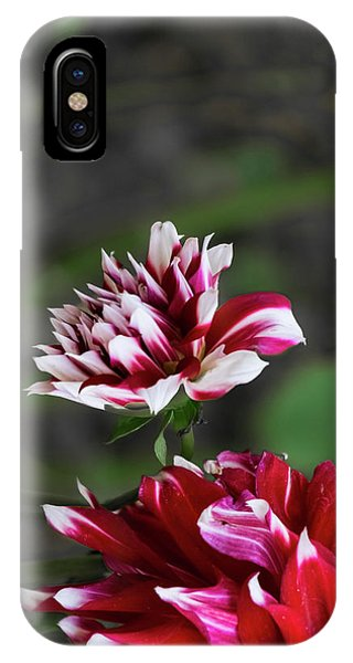 Dancing Dahlia IPhone Case